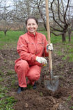 Happy  mature woman planting fruit tree. At garden in spring Stock Photos