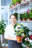Happy mature woman with Stephanotis Stock Images