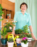 Happy mature woman taking care of her flowers Royalty Free Stock Photos