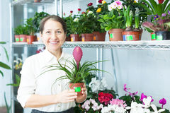 Happy mature woman with Tillandsia plant Royalty Free Stock Photo