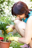 Happy middle age woman gardening Royalty Free Stock Photography