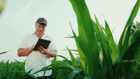 Happy middle-aged farmer working on a field of corn. Uses a digital tablet, a bottom view. 4K video stock footage