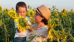 Happy mom and baby are looking at a bright yellow sunflower flower in the field at sunset. A little boy sitting on his. Mother`s hands. Slow motion camera stock footage