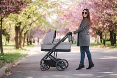Happy mom walk with her little baby girl in stroller. Background of pink sakura tree royalty free stock image