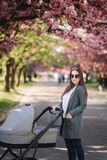 Happy mom walk with her little baby girl in stroller. Background of pink sakura tree royalty free stock photography