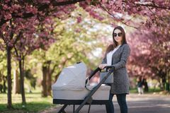 Happy mom walk with her little baby girl in stroller. Background of pink sakura tree stock photos
