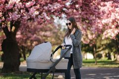 Happy mom walk with her little baby girl in stroller. Background of pink sakura tree stock photography