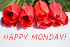 Happy monday. Red tulips and text. Royalty Free Stock Image