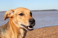 Happy mongrel dog under the sun. Portrait of mongrel dog sitting in the sun in summer Stock Images