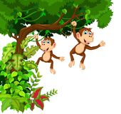Happy monkey cartoon hanging Royalty Free Stock Photography