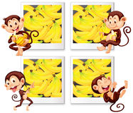 Happy monkeys eating banana Stock Images