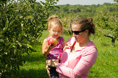 Happy mother and daughter. Half body portrait of happy mother holding preschool daughter in orchard, child with ripe apple Royalty Free Stock Images
