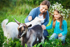 Happy mother and her daughter with baby goats Stock Images