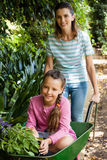 Happy mother pushing girl with flowers sitting in wheelbarrow Royalty Free Stock Image