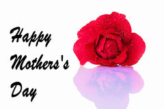 Happy Mother with a red rose Stock Images