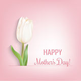 Happy mother's day card. White tulip and congratulations text. Light pink background Stock Image