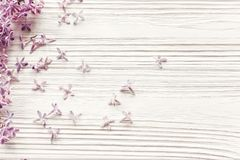Happy mother`s day. spring flat lay with tenderl lilac flowers i Stock Photography
