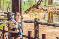 Happy mother and son watching and feeding giraffe in zoo. Happy family having fun with animals safari park on warm. Summer day stock photography