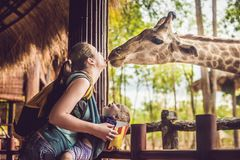 Happy mother and son watching and feeding giraffe in zoo. Happy family having fun with animals safari park on warm. Summer day stock image