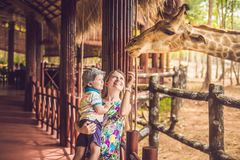 Happy mother and son watching and feeding giraffe in zoo. Happy family having fun with animals safari park on warm. Summer day stock images