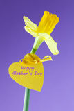 Happy mothers day. Flower with label and text for mothers day Stock Photography