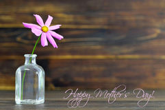 Happy Mothers Day card with single cosmos flower Royalty Free Stock Photo