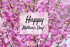 Happy Mothers Day Greeting Card with Flowers Background. Mother`s day greeting card with pink magnolia tree background Royalty Free Stock Photos