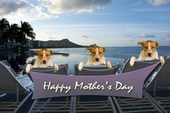 Happy Mothers Day. Happy Mothers Day sign with three doggys relaxing stock photography