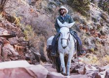 A happy mule guide takes visitors on a tour up the Bright Angel Trail at the Grand Canyon, USA. Grand Canyon, ARIZONA - October 22 2017: A happy mule guide royalty free stock photo