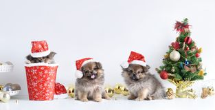 Happy New Year, Christmas, Dog in Santa Claus hat, Celebration balls and other decoration.  Stock Photography