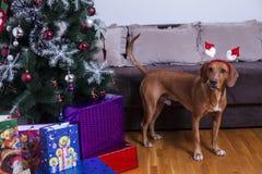 Happy New Year, Christmas, holidays and celebration Stock Photography