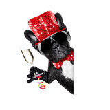 Happy new year dog celberation Royalty Free Stock Image