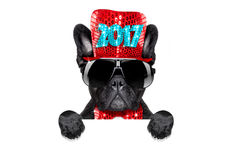 Happy new year dog celberation Stock Photography
