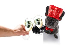 Happy new year dog celberation Stock Image