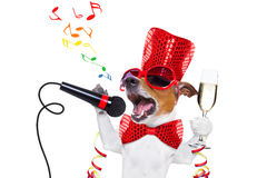 Happy new year dog celberation Royalty Free Stock Photography