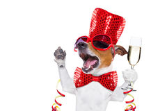 Happy new year dog celberation Stock Images
