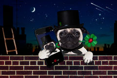 Happy new year dog celberation. Pug dog as chimney sweeper with four leaf clover  behind wall banner or placard, celebrating and toasting for new years eve Stock Photography