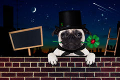 Happy new year dog celberation. Pug dog as chimney sweeper with four leaf clover  behind wall banner or placard, celebrating and toasting for new years eve Stock Image