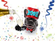 Happy new year dog celebration Stock Photos