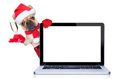 Happy new year dog Stock Photo