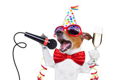 Happy new year dog. Jack russell dog celebrating new years eve with champagne and singing karaoke with a microphone, isolated on white background Royalty Free Stock Images