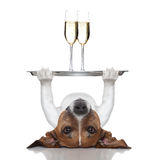 Happy new year dog Royalty Free Stock Photography