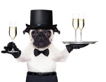 Happy new year dog. Pug with a champagne glass holding a service tray with two glasses , holding one glass on the other hand royalty free stock photos