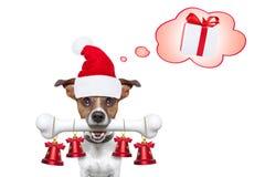 Happy new year dog Royalty Free Stock Photos