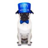 Happy new year dog Stock Image