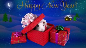 Happy New Year greeting card with text, funny rabbit opening present box stock video footage