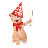 Happy New Year 2016. Laughing cat with glass of champagne and party hat Happy New Year 2016 stock photos