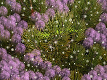 Happy New Year 1. Light bright mild beauty pine greeting holiday Stock Image