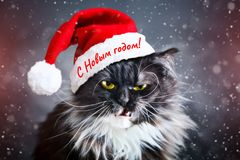 Happy new year. New Year`s cat in a Christmas hat. New. Happy new year. New Year`s cat in a Christmas hat. New Year`s background Stock Image
