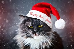 Happy new year. New Year`s cat in a Christmas hat. New. Happy new year. New Year`s cat in a Christmas hat. New Year`s background Royalty Free Stock Photo